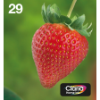 Epson Multipack 4-colours 29 EasyMail